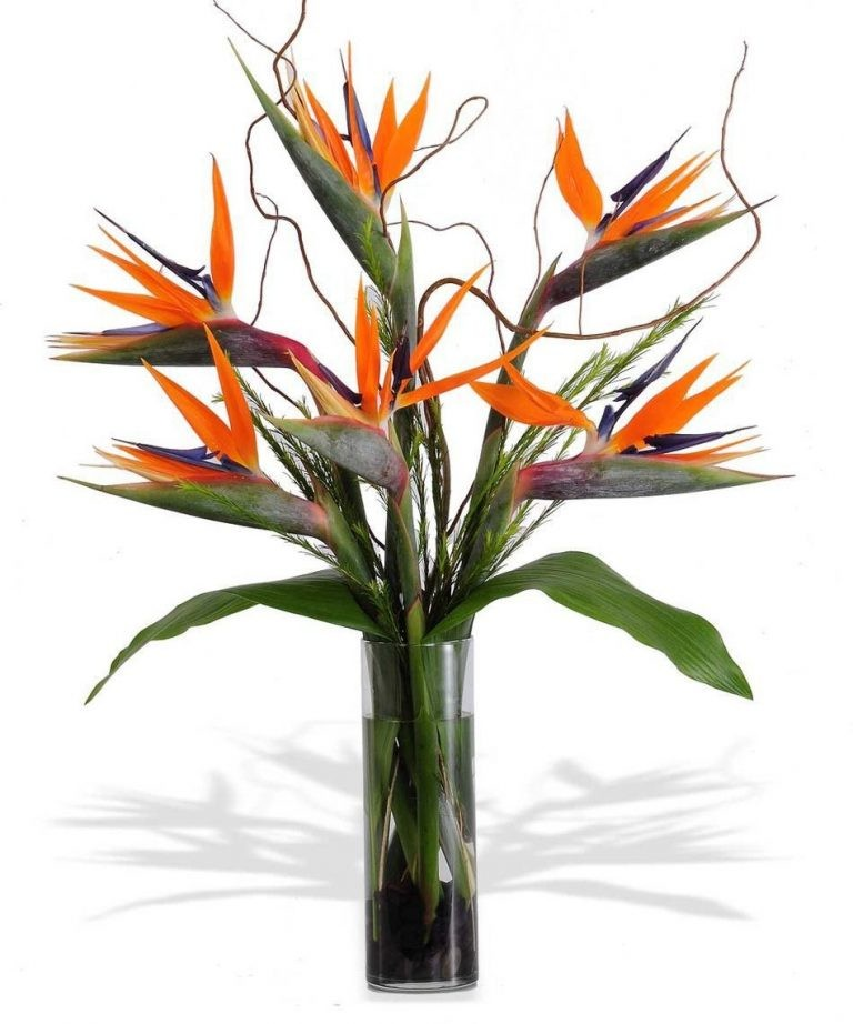Exotic Flower Arrangements